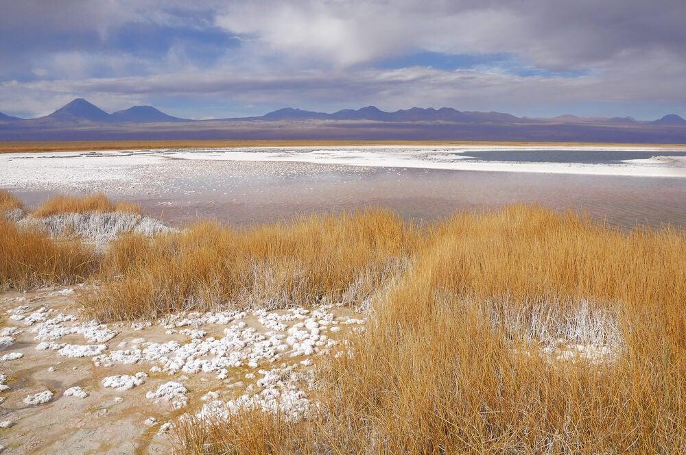 Vista de la laguna Cejar