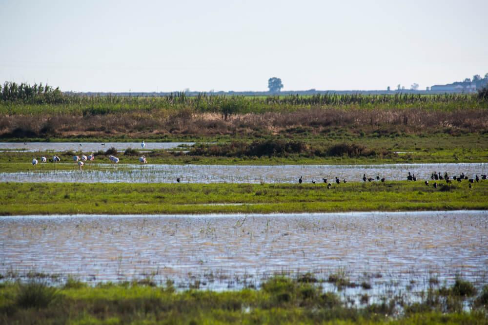 Doñana cumple 50 años como parque nacional