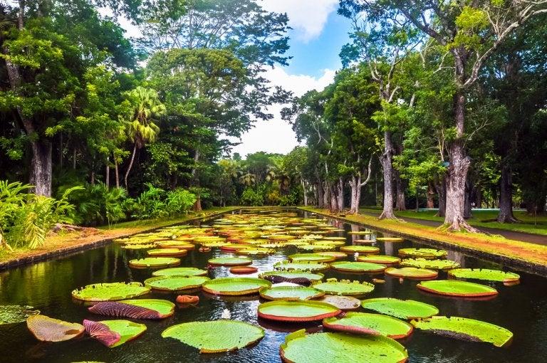 Los mejores jardines botánicos del mundo