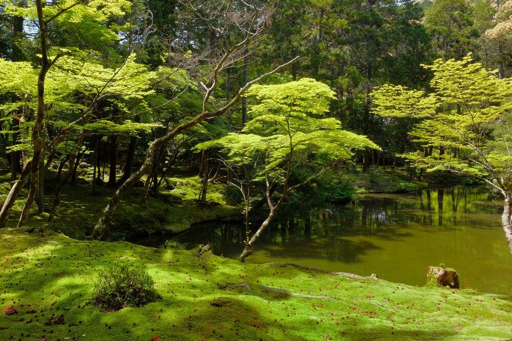 Saihō-ji, uno de los mejores jardines botánicos del mundo