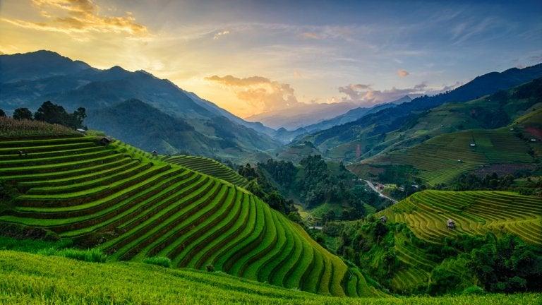 La agricultura tradicional en Asia Oriental