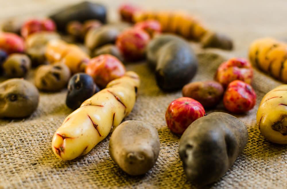 Descubre la variedad de papas nativas del Perú