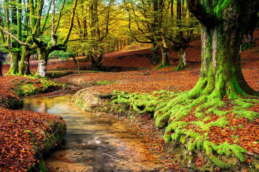 Gorbea, uno de los bosques más espectaculares