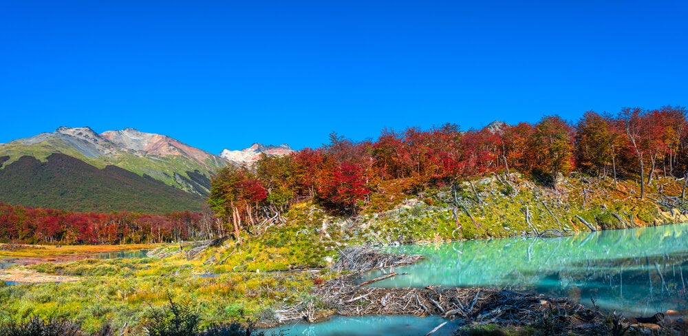 Bosque en la Patagonia