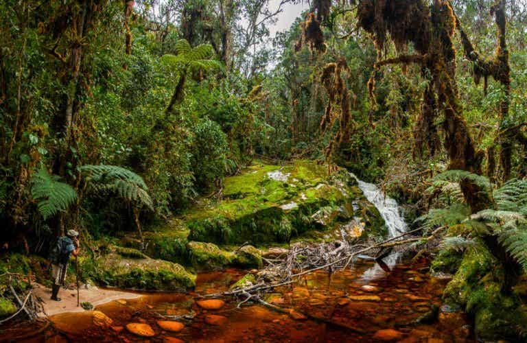 La Cueva de los Guácharos, un lugar enigmático