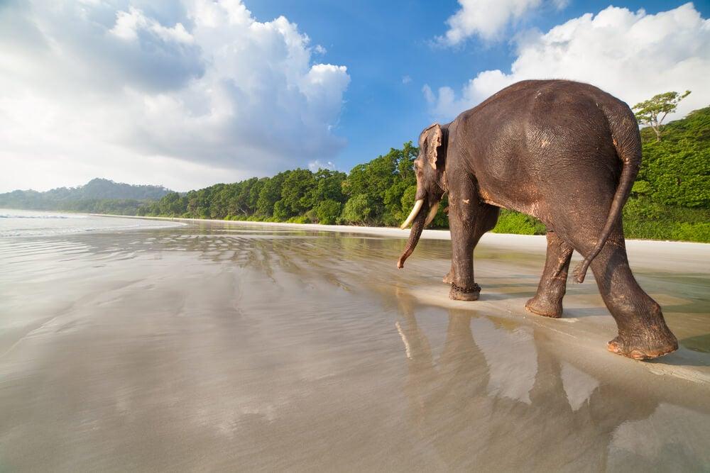 Elefante en la playa