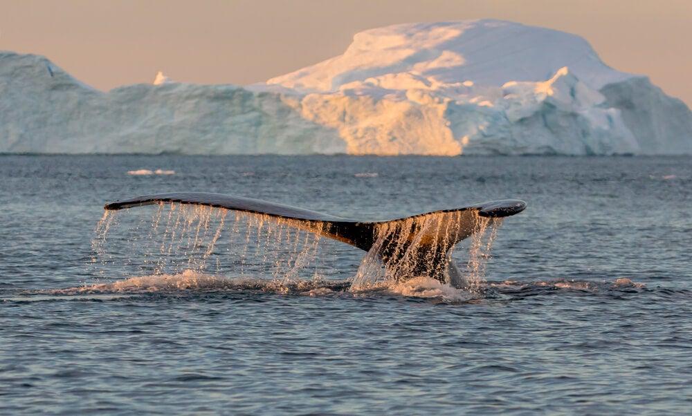 Ballena en la Reserva Glacier Bay