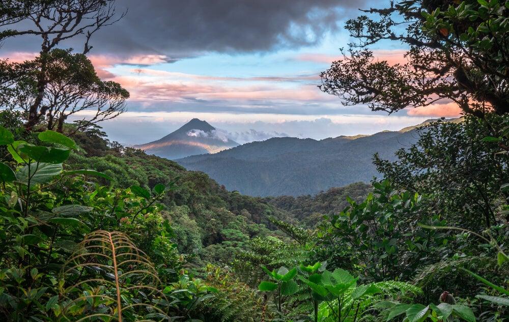 Descubre los fabulosos bosques de Costa Rica
