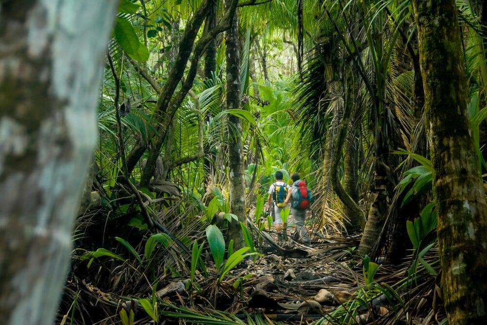 Selva en Costa Rica, lugar a donde viajar si eres aventurero