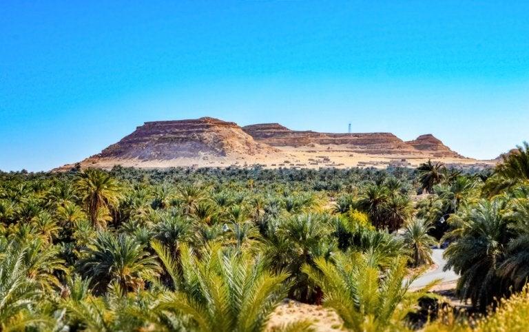 Siwa en el desierto de Egipto