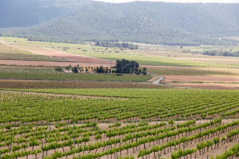Terres dels Alforins, la Toscana valenciana