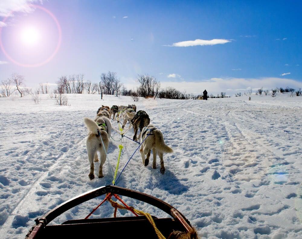 Trineo tirado por huskies