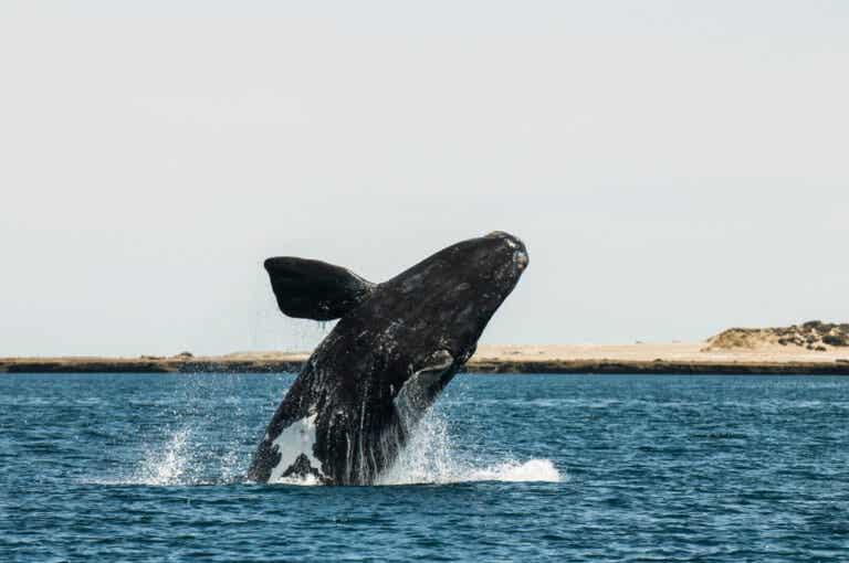 La península Valdés, un lugar mágico en Argentina