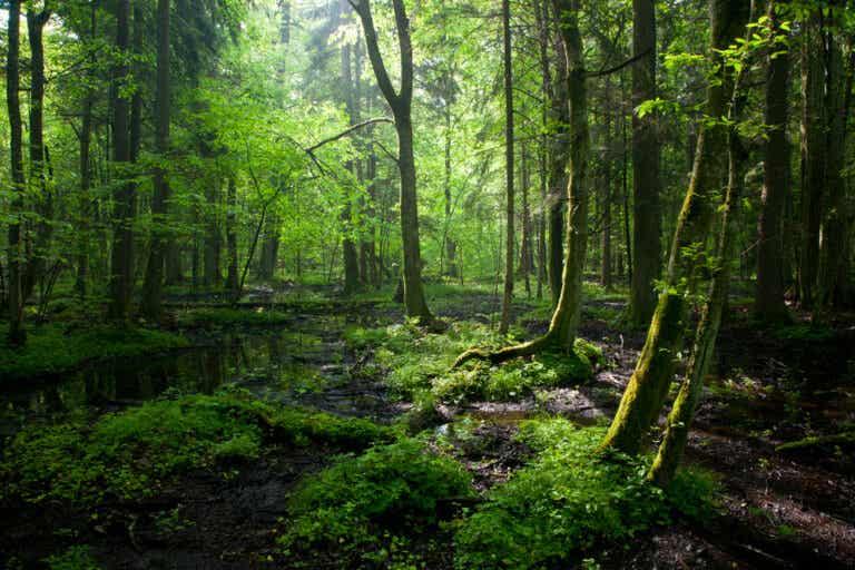 El bosque de Bialowieza: una sorprendente reserva natural