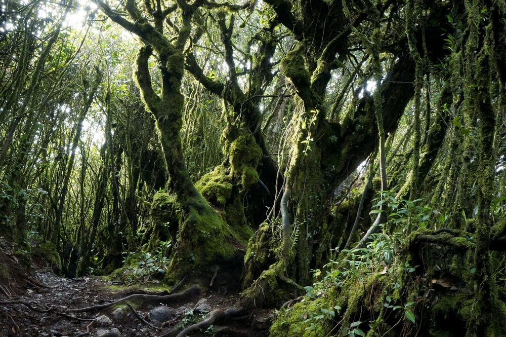 Paisaje de Mossy Forest
