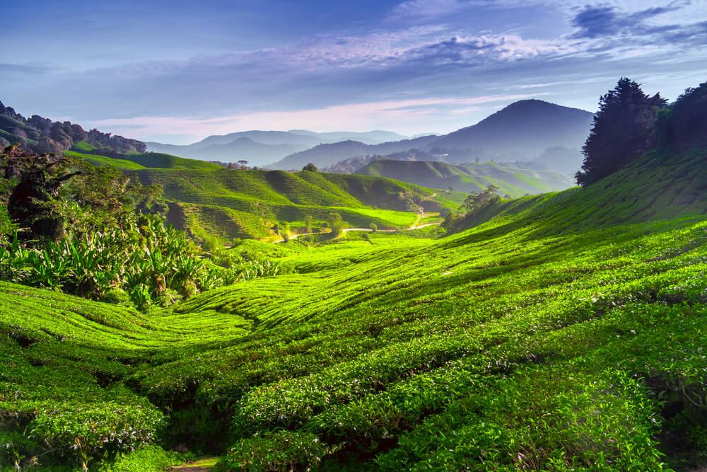 Paisaje de Cameron Highlands, entre lo mejor de Malasia