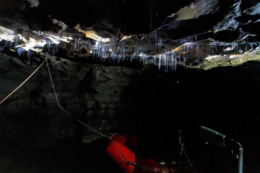 Gusanos bioluminiscentes en las cuevas de Waitomo
