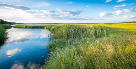 Paisaje en Gotland