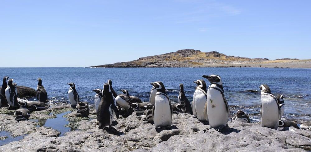 Pngüinos de Magallanes en península Valdés