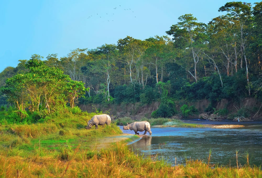 Rinocerontes en el Parque Nacional de Chitwan