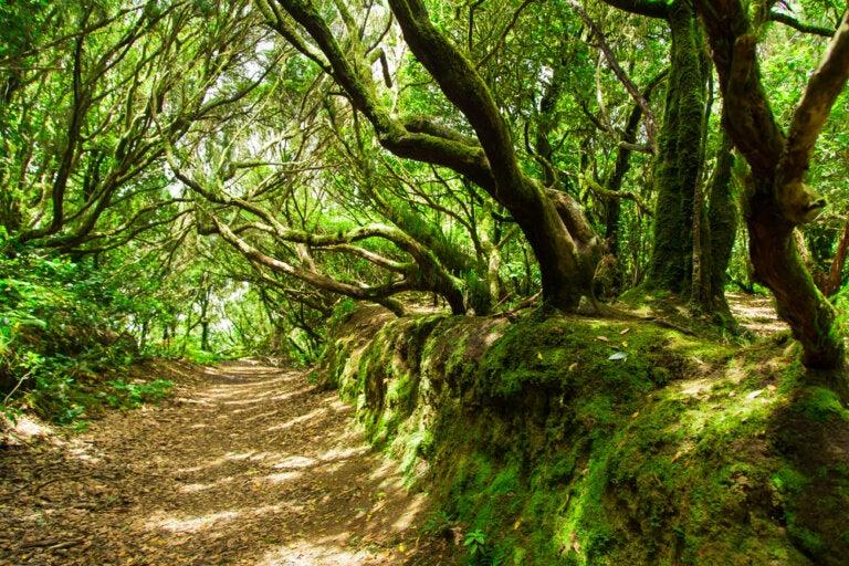 Descubre los bosques de laurisilva de Tenerife