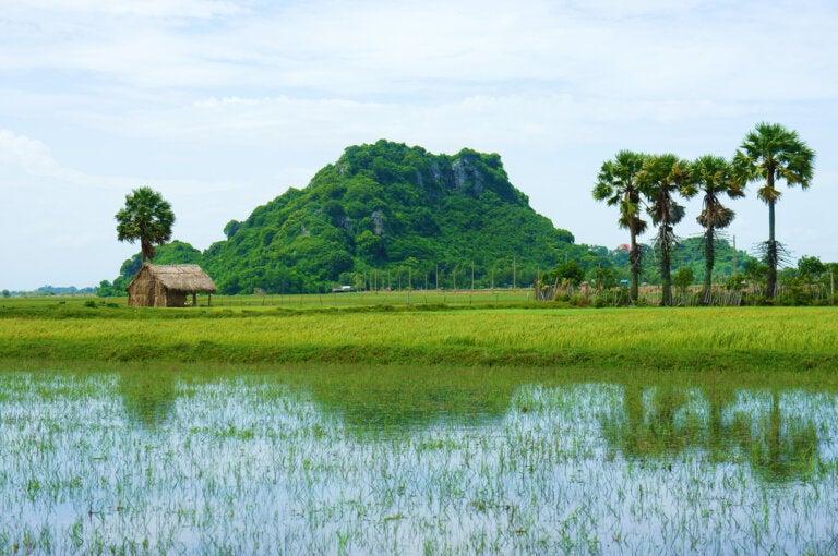 Un recorrido por el delta del río Mekong