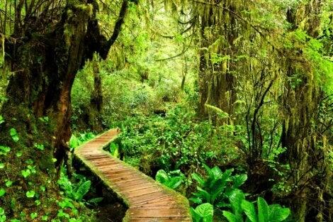 Vista del Parque Nacional Pacific Rim