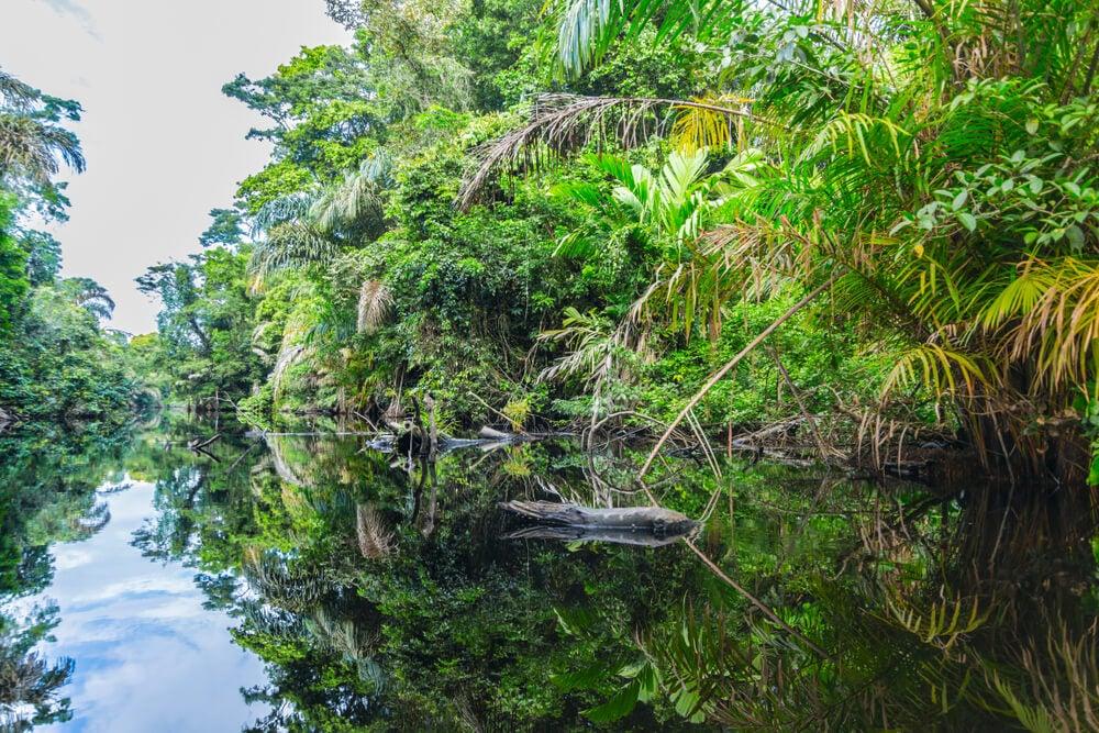 Parque Nacional de Tortuguero: una de las joyas de Costa Rica