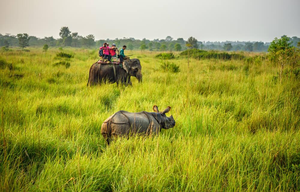 Saari en elefante