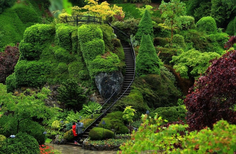 Vegetación en los jardines