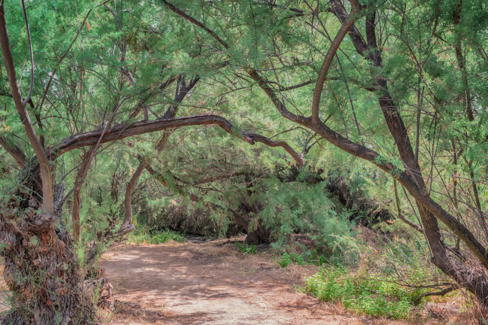 Bosque en Las Tablas