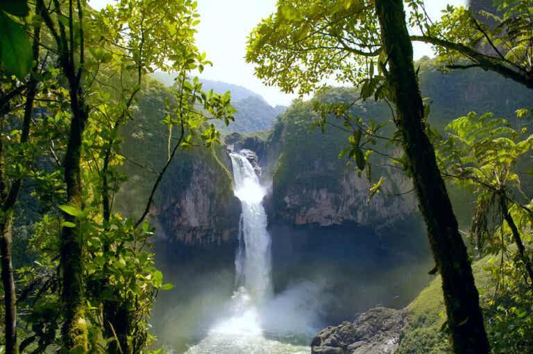 La Amazonía en Ecuador: conoce una hermosa selva