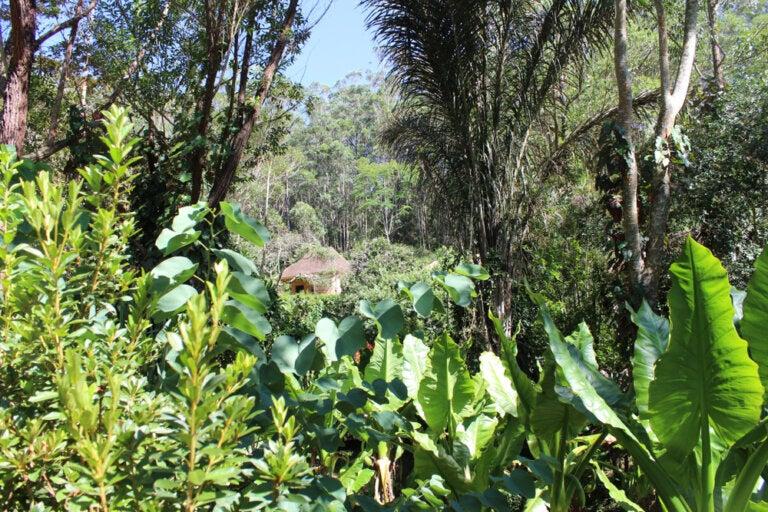 El Parque Nacional Andasibe Mantadia en Madagascar