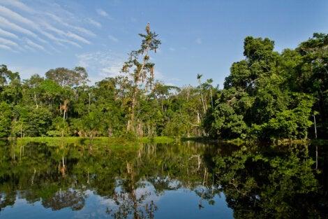 Paisaje del Parque Nacional Yasuní