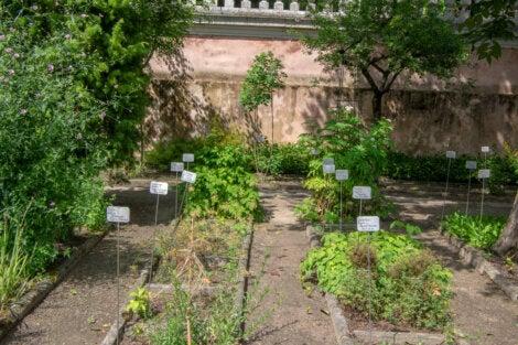 Plantas medicinales del Jardín Botánica de Padua.