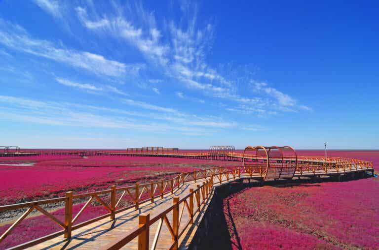 La ciudad de Panjin y espectacular Playa Roja