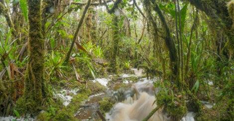 Selva en Zamora Chinchipe, en la Amazonía en Ecuador