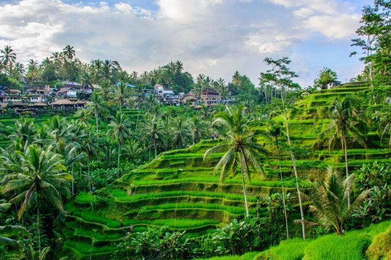 Ubud en Indonesia: qué es lo que no te debes perder
