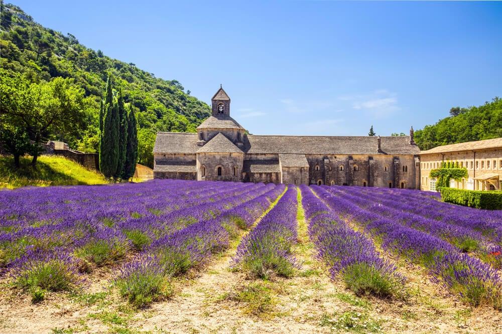 La abadía de Gordes, rodeada por campos de lavanda.