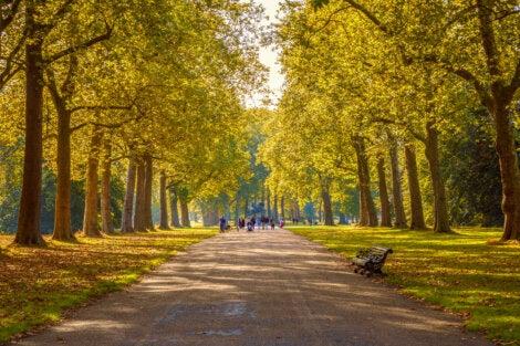 Vista de otoño en Hyde Park, Londres.