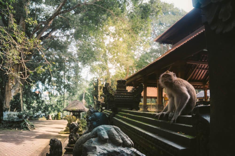 El Santuario de los Monos en Bali.