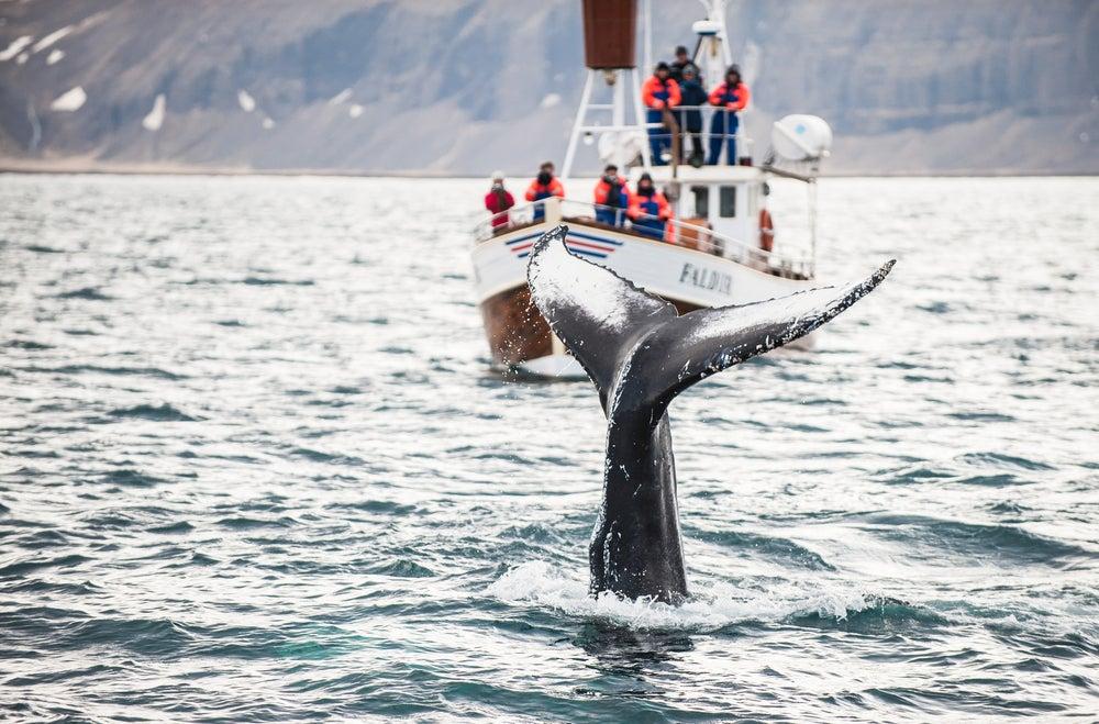 Turistas haciendo avistamiento de ballenas en Islandia.