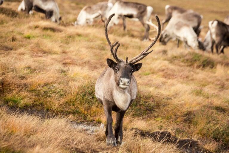 Renos en Escocia: una gran experiencia