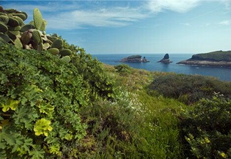 Diversidad de flora marina en las Islas Columbretes.