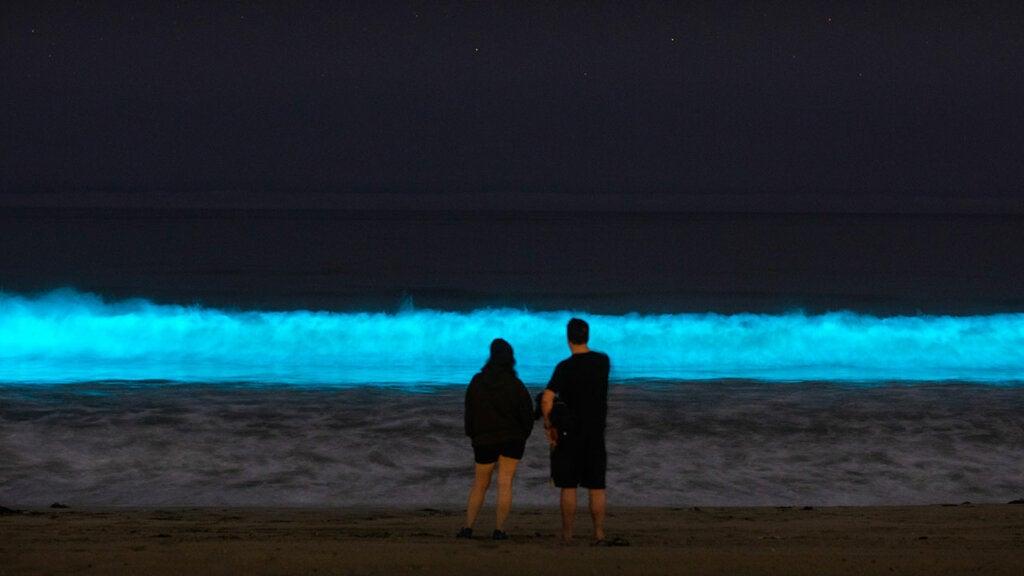 La bioluminiscencia de Holbox, imagen impresionante en México.