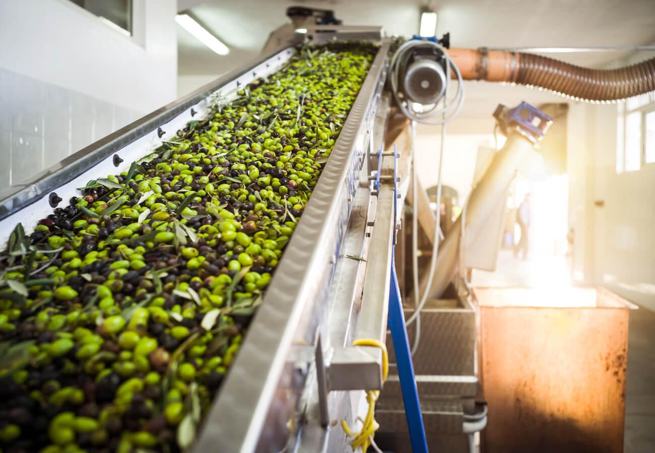 Proceso de fabricación del aceite de oliva.