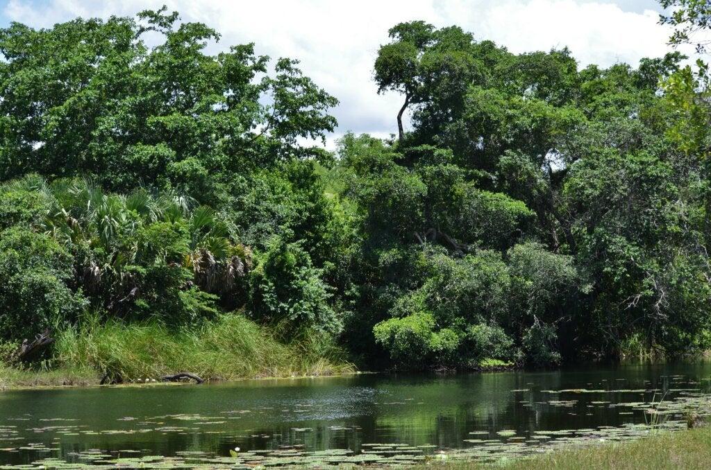 La reserva natural de Ich Ha Lol Xaan presenta una enorme variedad de fauna para conocer.