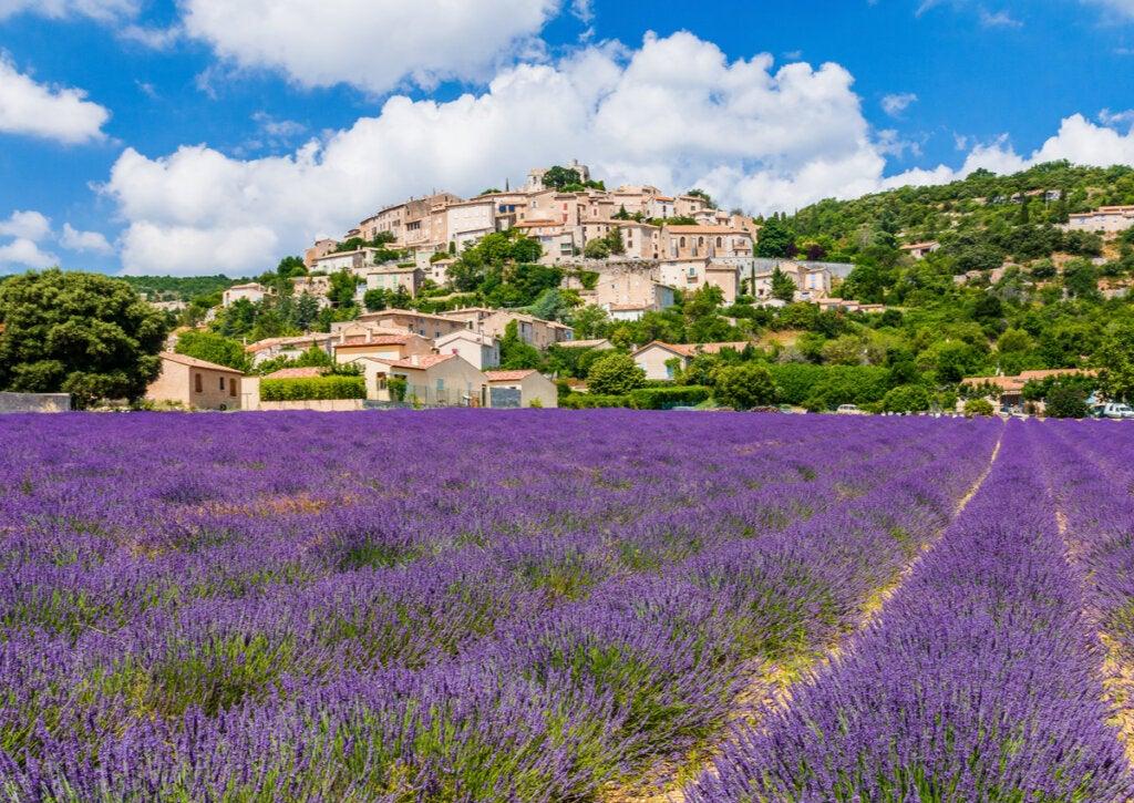 Campos de lavanda en la región de Provenza, Francia.