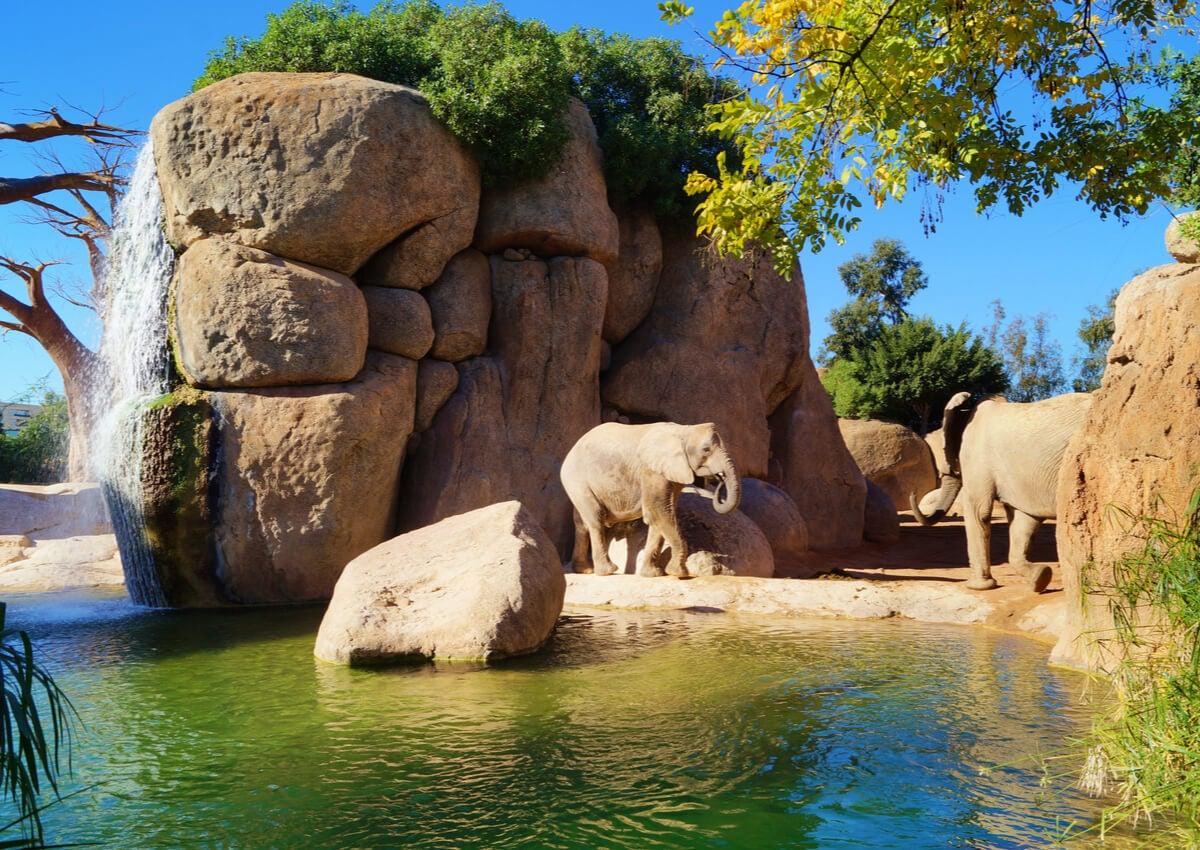 Elefantes en el Bioparc de Valencia.