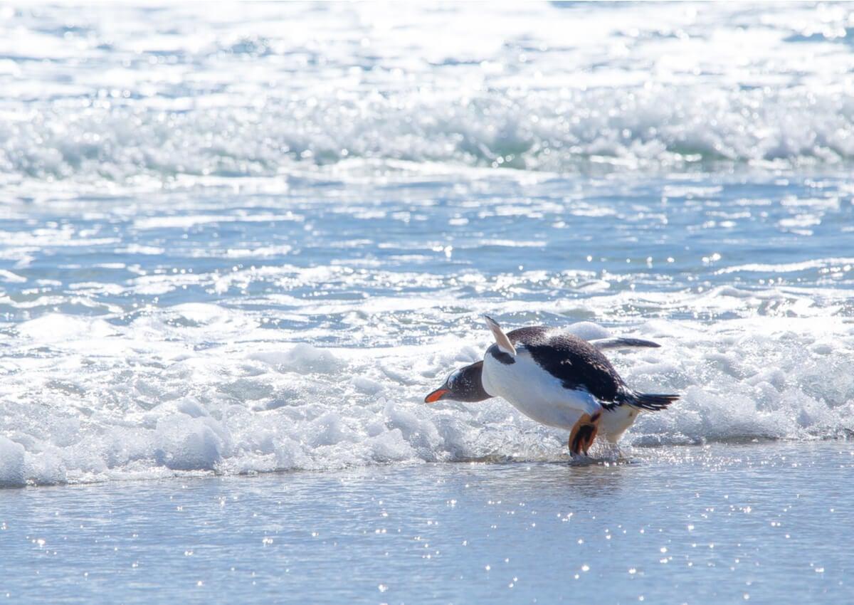Pingüinos habitando en la Antártida.